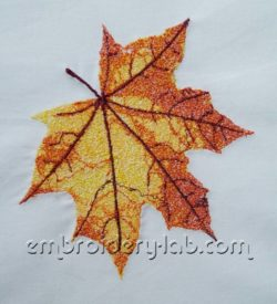Maple leaf 0001
