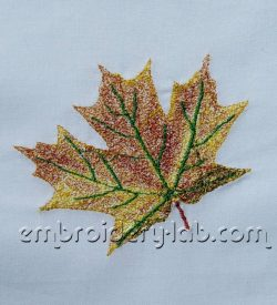 Maple leaf 0002