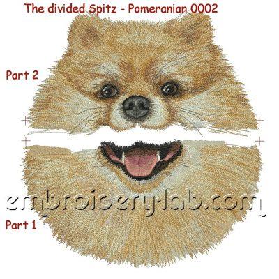 Spitz - Pomeranian 0001