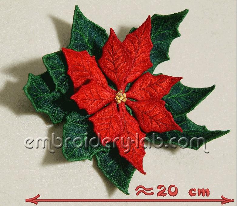 Poinsettia 0001
