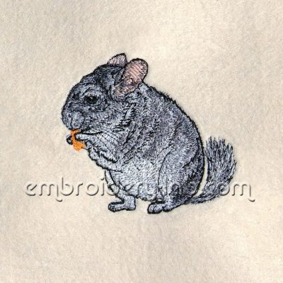 chinchilla 0001