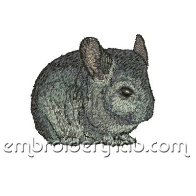chinchilla 0002