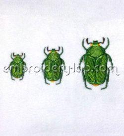 Beetle 0001